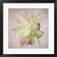 Framed Pink Parrot Tulip Painting II