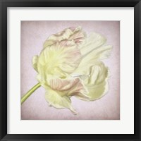 Framed Pink Parrot Tulip Painting III