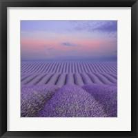 Framed Lavender Field at Dusk