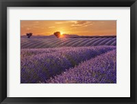 Framed Lavender Field at Sunset
