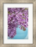 Framed Lilacs in Blue Vase II