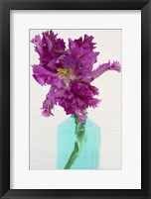 Framed Purple Parrot Tulip