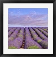Framed Lavender Hill