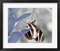 Framed Metamorphosis