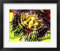 Framed African Orchid