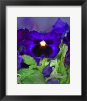 Framed African Pan Orchid