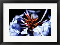 Framed Blue And Orange Flower