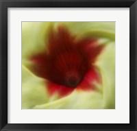 Framed Flower Edible