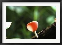 Framed Fungus 2