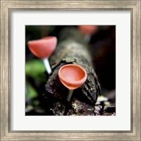 Framed Fungus
