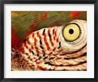 Framed Polly Eye