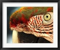 Framed Polly