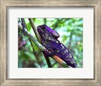 Framed Purple Iguana