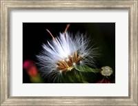 Framed Snow Flower
