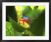 Framed Stink Bug