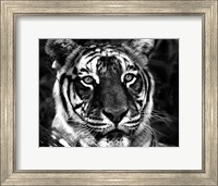 Framed Observer Black & White