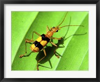 Framed Yellow Bug