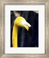 Framed Yellow Flamingo