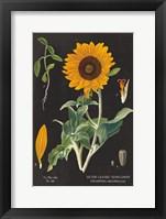 Framed Sunflower Chart