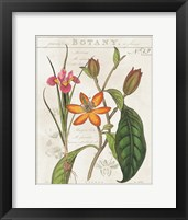 Framed Vintage Flora III Ivory
