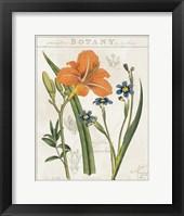 Framed Vintage Flora II Ivory