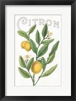 Framed Classic Citrus V v2