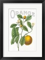 Framed Classic Citrus VI v2