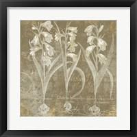 Framed Flower Lines I