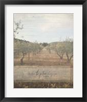 Framed Jeremiah Olive Grove