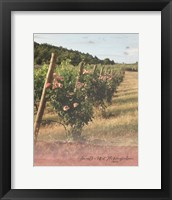 Framed Vineyard Roses