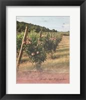 Framed Vineyard Roses