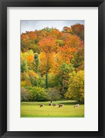 Framed Peaceful Pasture