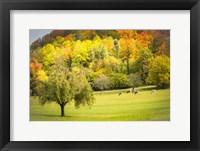 Framed Peaceful Pasture II