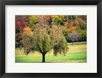 Framed Tree in the Pasture