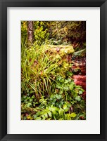 Framed Black Forest River Bank