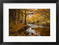 Framed Black Forest River