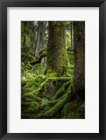 Framed Ancient Forest