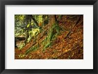 Framed Ancient Trees