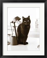 Framed Lights Cat Action