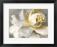 Framed Abstract Rose