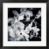 Framed Black and White Anemones