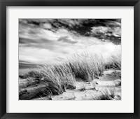 Framed Beach Dunes