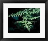 Framed Forest Fern