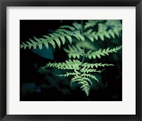 Framed Forest Fern
