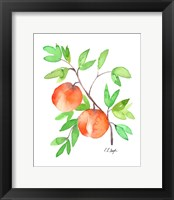 Framed Two Watercolor Peaches