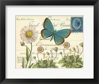 Framed Turquoise Butterfly and Daisies