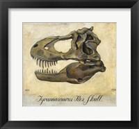 Framed Tyrannosaurus Rex Skull