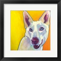 Framed Husky - Charlie
