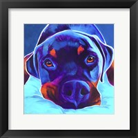 Framed Rottie - Dexter 2