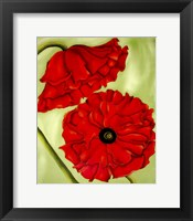 Framed Two Poppies